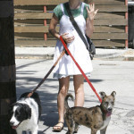 Stephen Moyer sends his dogs to boot camp