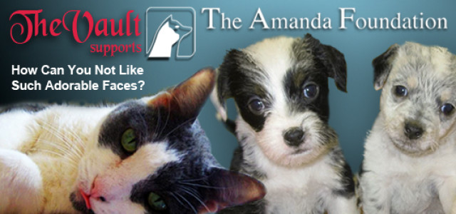 The Amanda Foundation