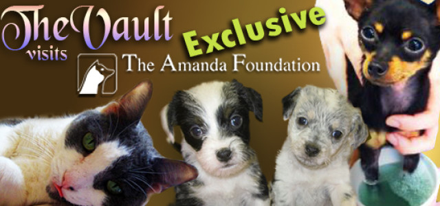 The Vault Visits The Amanda Foundation