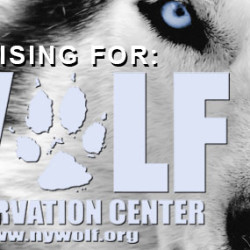 Joe Manganiello signed undies and T-shirt for wolf sanctuary