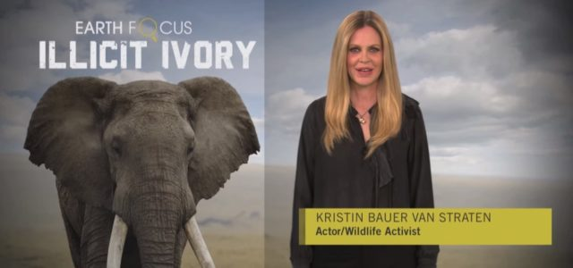Kristin Bauer interview and video on saving Elephants
